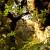Villa_Gregoriana_Tivoli_0021
