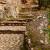 Villa_Gregoriana_Tivoli_0086